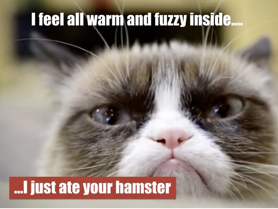 Ate Your Hamster