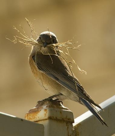 Bird Building a Nest